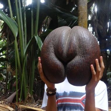 Cocos femeninos