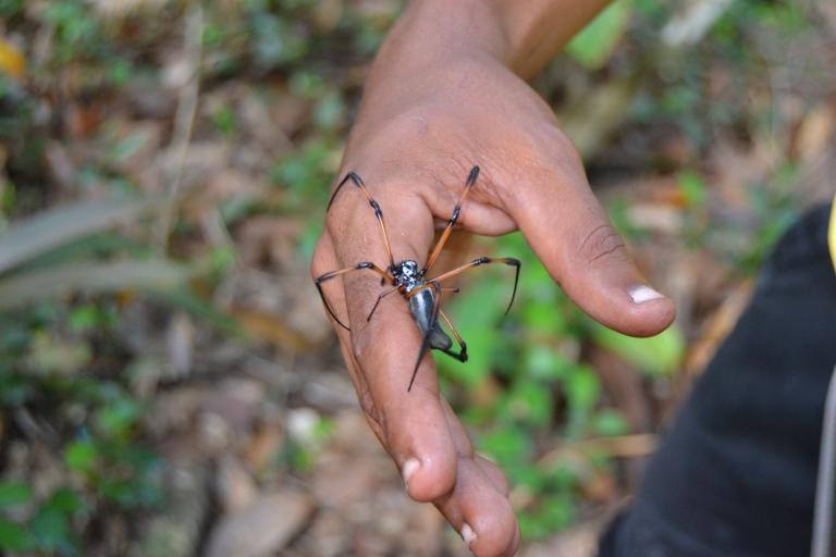 La araña más afortunada del mundo