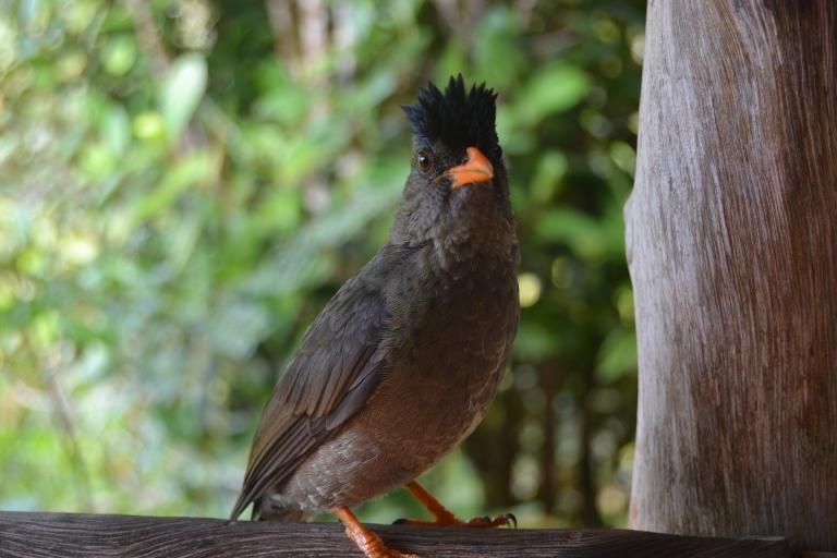 Pájaro presumido