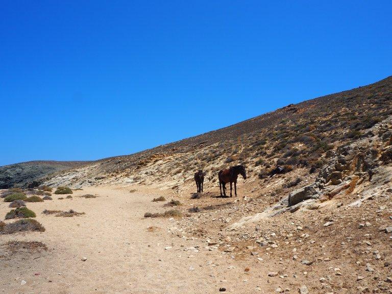 El camino para llegar a Fokos