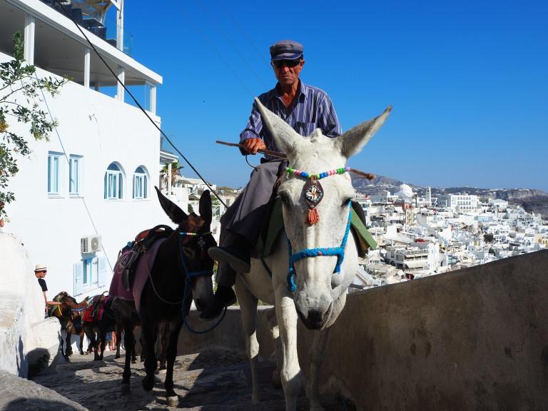 Los caballos pasean por las calles de Thira