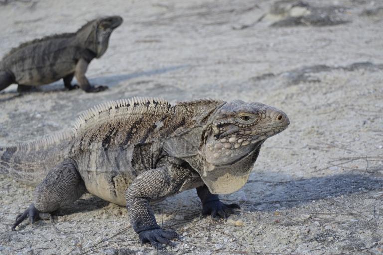 Cayo Iguana, una isla con habitantes especiales