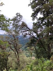 El bosque del Cerro de la Muerte