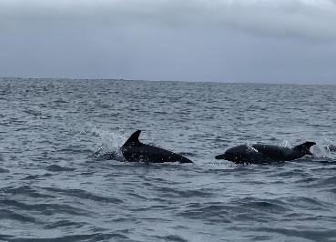 Delfines manchados acompañándonos en el trayecto