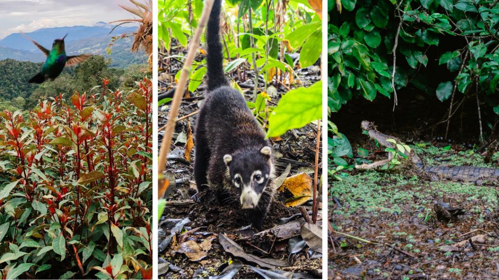 Cómo viajar de manera responsable por Costa Rica